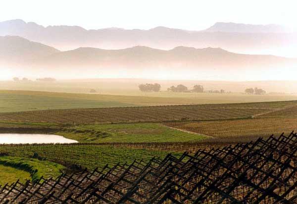 Winery Profile & Riebeek Cellars u2013 Stile Brands
